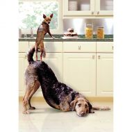 Image for Two Clever Dogs Greetings Card
