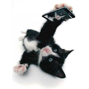 Kitten Selfie Card