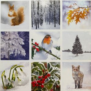 Winter Scene Windows Christmas Cards