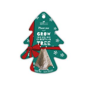 Grow Your Own Christmas Tree Seeds!